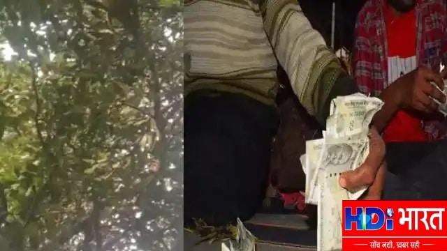 सीतापुर: अचानक पेड़ से गिरने लगे 500-500 के नोट