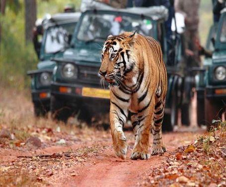 पीलीभीत टाइगर रिजर्व, Pilibhit Tiger Reserve